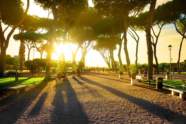 Image of a park with trees at sunset