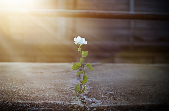 Image of white flower growing on street crack in sunbeam, soft focus.