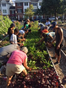 Image of the community gardening.