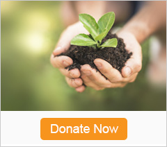 Image of hands with a seedling in them and the words Donate Now below them.