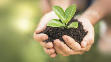 Image of child's hands holding a seedling in dirt.