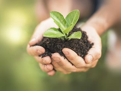 Photo of a seedling and dirt in a child's cupped hands.