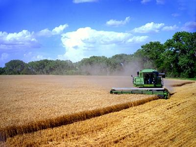 Image of a wheat harvest.