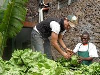 Photo of Joe Heritage, Director of Uhuru Child, selling lettuce produce in Nairobi.